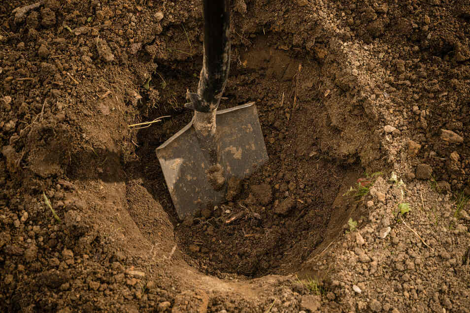 Tipp 1: Kompost ins Pflanzloch Das Loch muss doppelt so breit und tief wie der Pflanzballen sein. Kompost untermischen. Bis Zaun oder Nachbarbaum drei Meter Abstand bei kleinen und fünf Meter bei großen Bäumen einhalten.