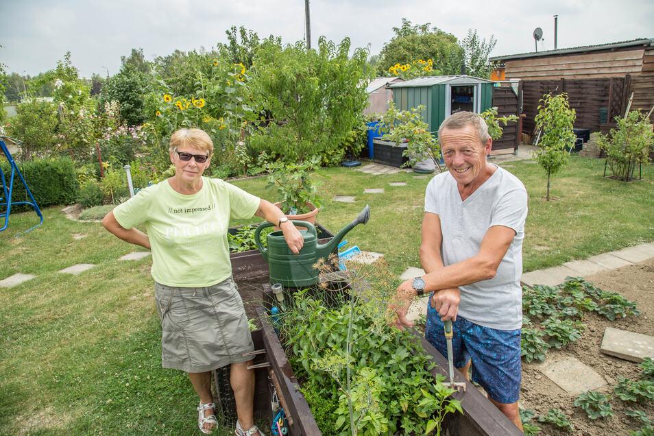Monika und Joachim Laufer in ihrem Kleingarten in Königshufen. Die Ernte hat bereits begonnen – viel früher als im Vorjahr.