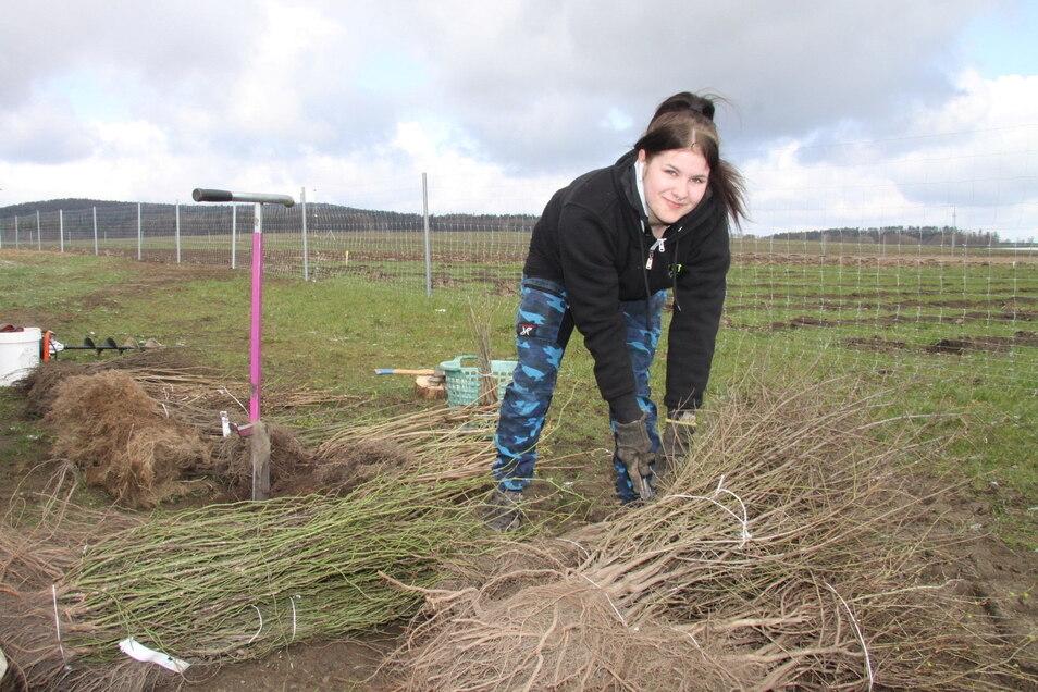 Jolina Hörig hilft beim Pflanzen. Über 3.000 junge Büsche und Bäume werden in Oberlichtenau zu einem neuen Waldstück.