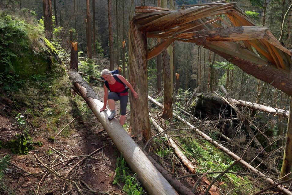 So sieht es in Teilen des Nationalparks aus, hier der rot markierte Wanderweg, der unterhalb der Gleitmannswände und des Heringsteins entlang führt.