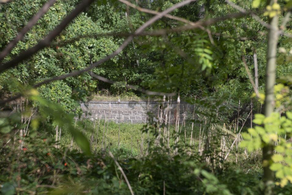Die Teiche in Prietitz sind als solche nicht mehr zu erkennen. Jetzt soll hier ein neuer Angelteich entstehen.