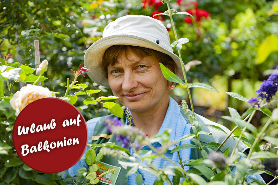 .Mehr Grün geht nicht: Gärtnerin Anett Thieme von der Baumschule Hans-Jörg Winkler in Priestewitz zwischen Rosen und Sommerflieder. Eine Pracht, an der sich auch die Kundschaft erfreue.