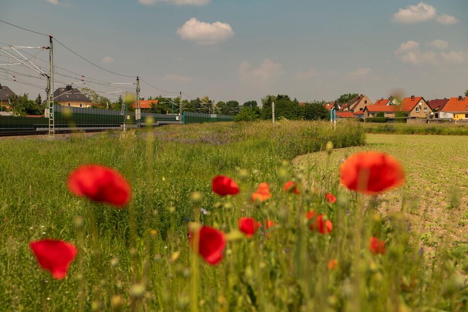 Ein zweites Stück, das mit Lärmschutz erweitert wird, befindet sich auf der anderen Gleisseite in Richtung Ortsausgang nach Priestewitz.