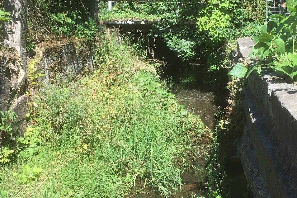 Besonders im Unterlauf ist der Bachlauf der Seltenrein so zugewuchert, dass es sich bei Hochwasser leicht aufstaut.