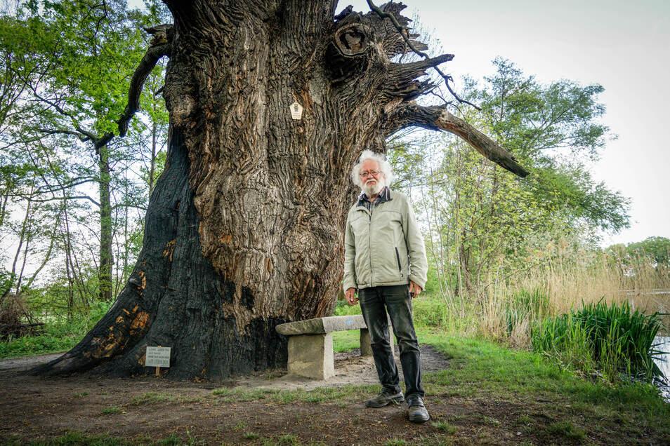 Grüne-Liga-Chef Rolf Kubenz freut sich über die jungen Triebe an der jahrhundertealten Rieseneiche von Niedergurig. Im Dezember war der Baum zweimal angezündet worden.