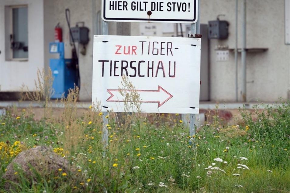 Die Tiger von Carmen Zander sind regelmäßig bei kleinen Shows zu bewundern.