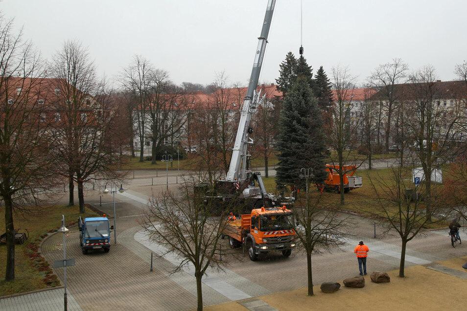 Mitarbeiter des Bauhofes Niesky haben am Montag den Weihnachtsbaum auf dem Zinzendorfplatz aufgestellt.