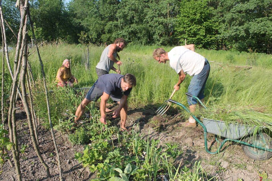 Das Feld am Stadtrand von Zittau wird gemeinsam bewirtschaftet (Foto: Elisa, Tim, Benjamin und Lukas, v.l.n.r.)