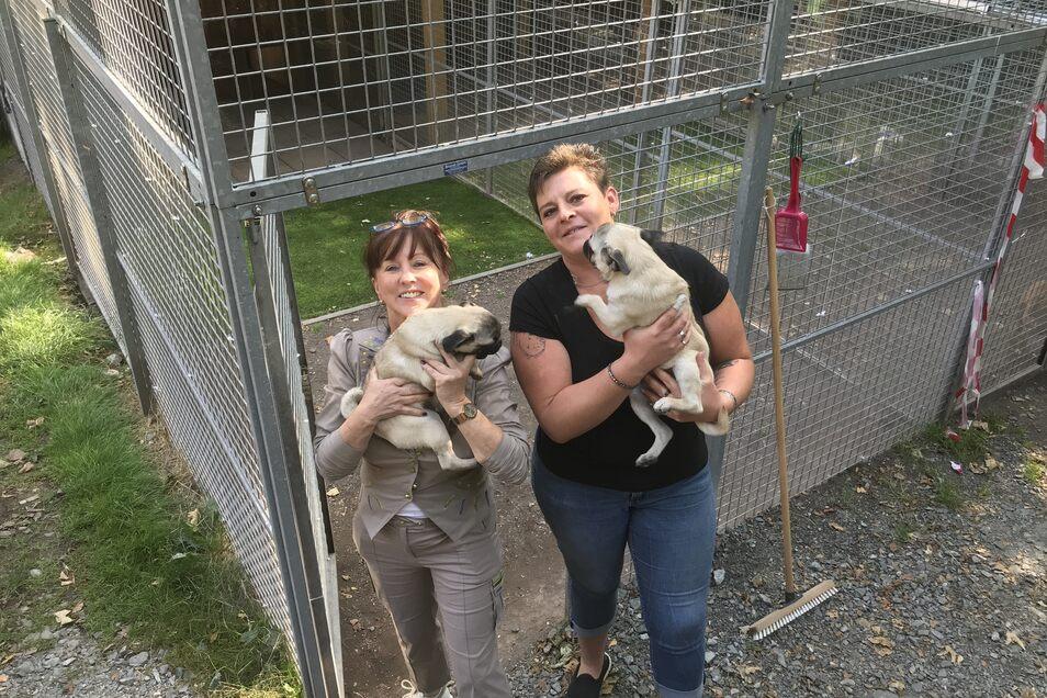 Die Vorsitzende des Tierschutzvereins Freital Regina Barthel-Marr (links) mit Tierheimleiterin Anja Witzmann: Auf dem Arm haben sie jeweils einen Mops aus der Schmugglerfahrt.
