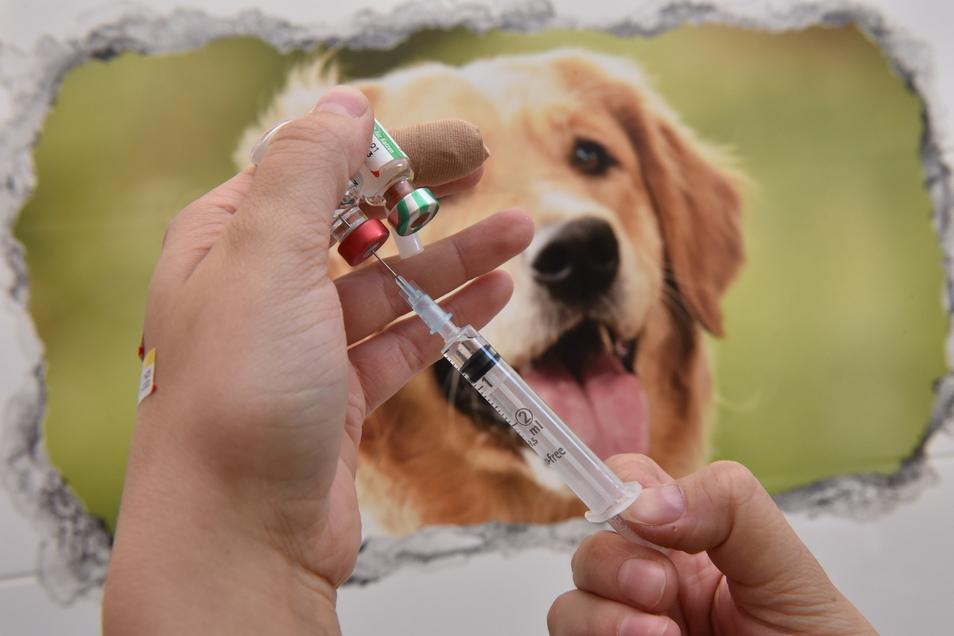 Impfungen gehören zu den häufigsten Prozeduren bei der Tierheimvisite.