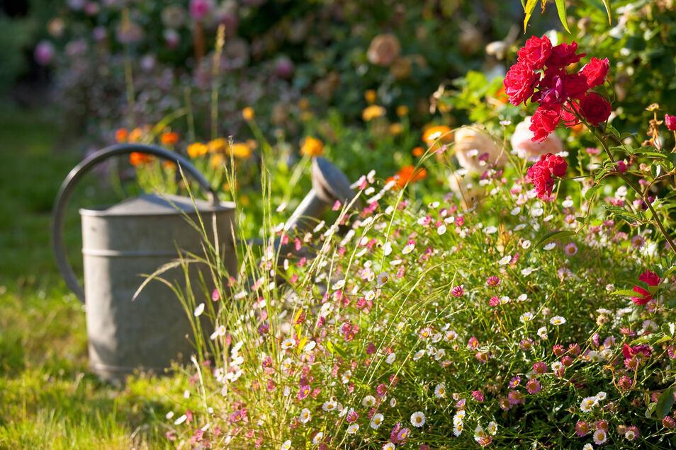 Ein Garten mit naturalistischem Grün holt man sich das Hochgebirge oder die Steppe nach Hause.