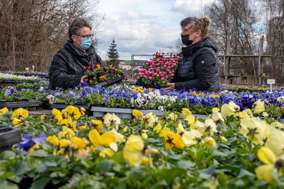 Bei BluBäu in Döbeln decken sich Antje Schubert aus Roßwein (links) und Petra Alexander aus Naußlitz mit Blumen ein. Die Roßweinerin pflanzt jedes Jahr Hornveilchen, die Naußlitzerin sucht passende Pflanzen für ihren Balkon. Beide besuchen den Gart