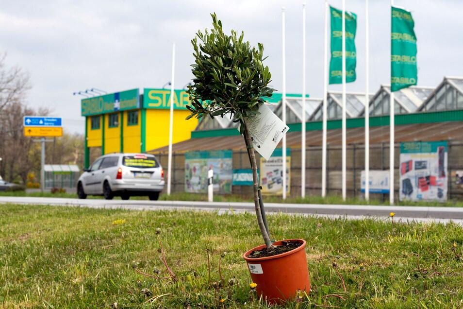 Wenn es nach Sachsens Sozialministerium und dem Landratsamt geht, bleiben die Gartencenter von Baumärkten im Landkreis Bautzen ab Montag wieder zu.