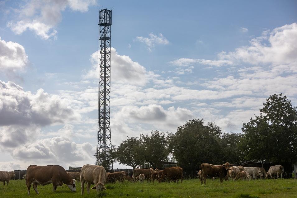 Kühe, Streuobstwiese und mittendrin ein 35 Meter hoher Stahlgittermast: Mobilfunkanbieter O2 investiert in sein Netz.
