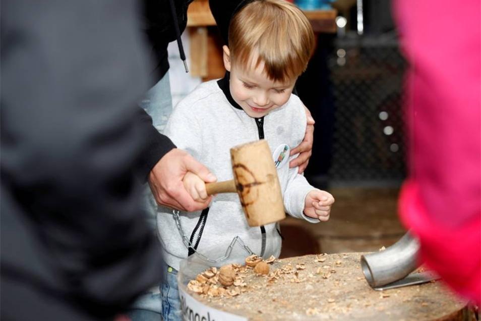 Das Kind hat Spaß mit dem Zerschlagen der Nüsse.