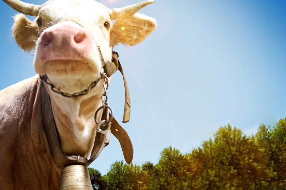 """,,Die Alm"""" kehrt zurück: ProSieben lädt Promis zum Urlaub auf dem Bauernhof ein."""