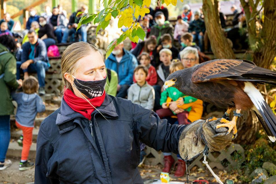 Die Falknershow gehört zu den Publikumslieblingen im Elbefreizeitland. Der Park wird dieses Jahr auch über den Winter geöffnet sein.