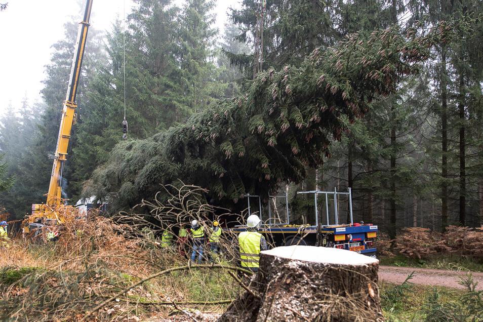 Der für den Berliner Breitscheidplatz bestimmte Baum wurde gefällt und abtransportiert. Aber er kam nicht an.