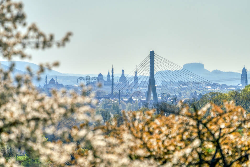 Wonnemonat April: Vor der Kulisse Dresdens blühen im Elbland die Kirschen.