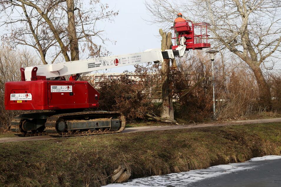 Mit Hilfe einer Hebebühne sind auch in der Vergangenheit Bäume am Elbe-Röder-Floßgraben Stück für Stück gesägt worden.