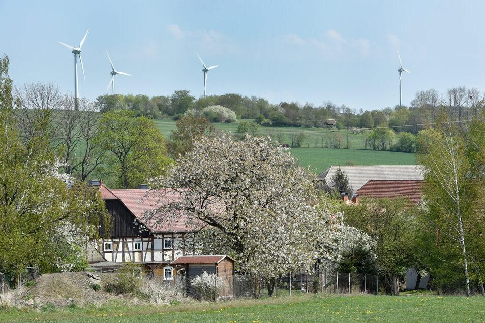 Die vier derzeitigen Windkraftanlagen auf dem Schanzberg in Oberseifersdorf. Die drei neuen sollen drei Mal so hoch sein.