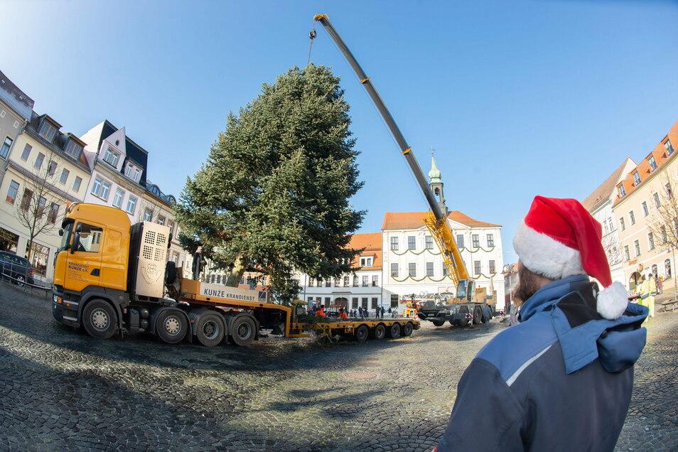 Auf dem Marktplatz in Radeberg wurde der Weihnachtsbaum aufgestellt. Es handelt sich um ein besonders schönes Exemplar.