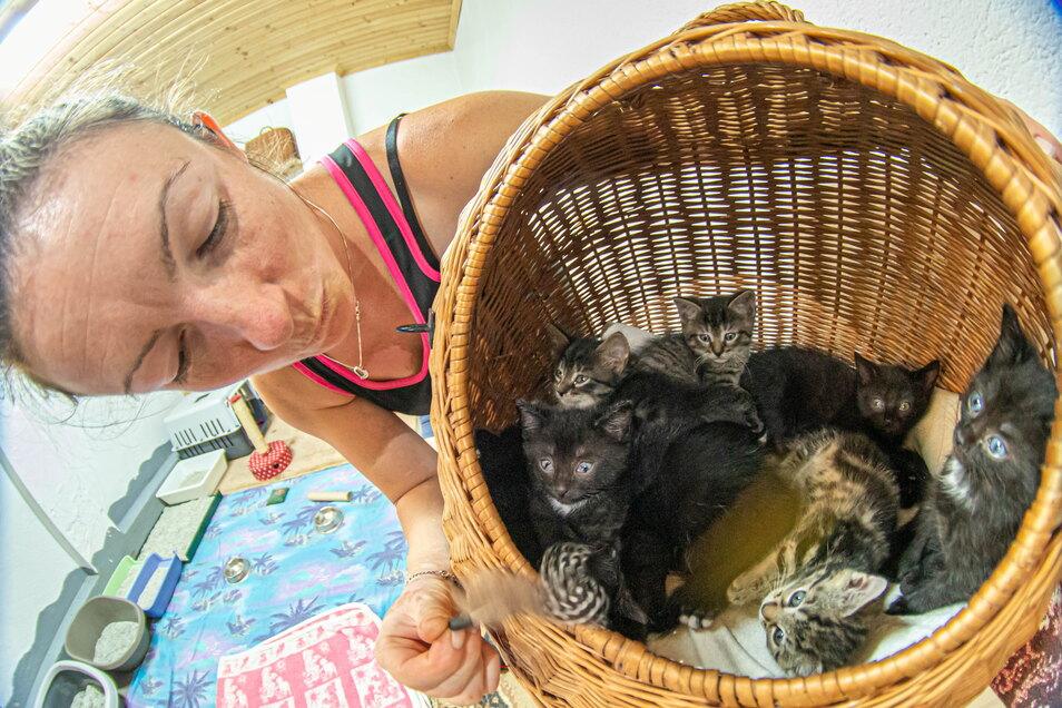 Ein Blick ins Glück: Aimeé Zille schaut auf einige der rund 40 Katzenbabies, die derzeit im Tierheim Horka auf ihre Vermittlung warten.