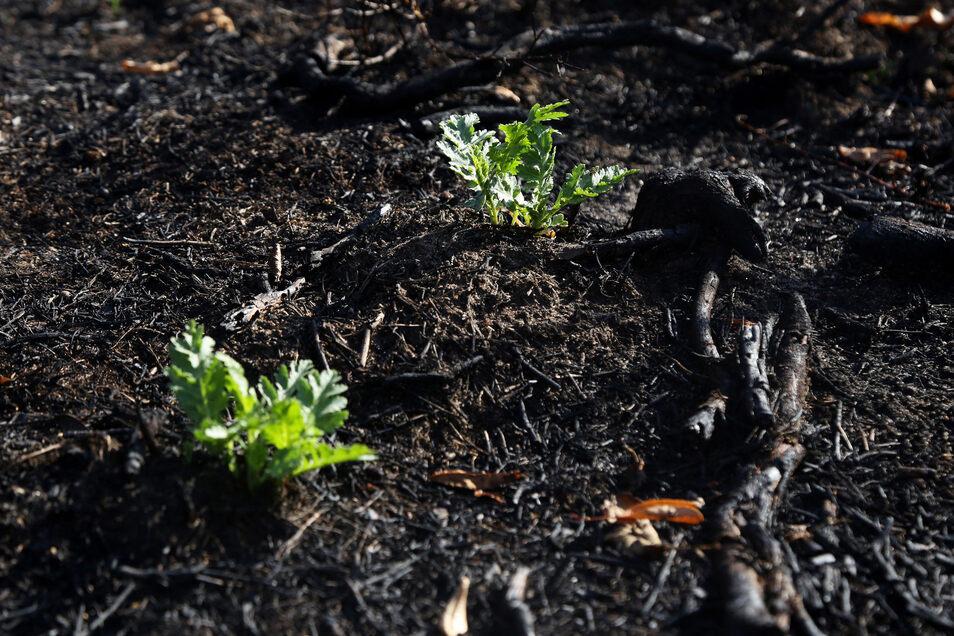 Langsam holt sich die Natur die Fläche zurück.