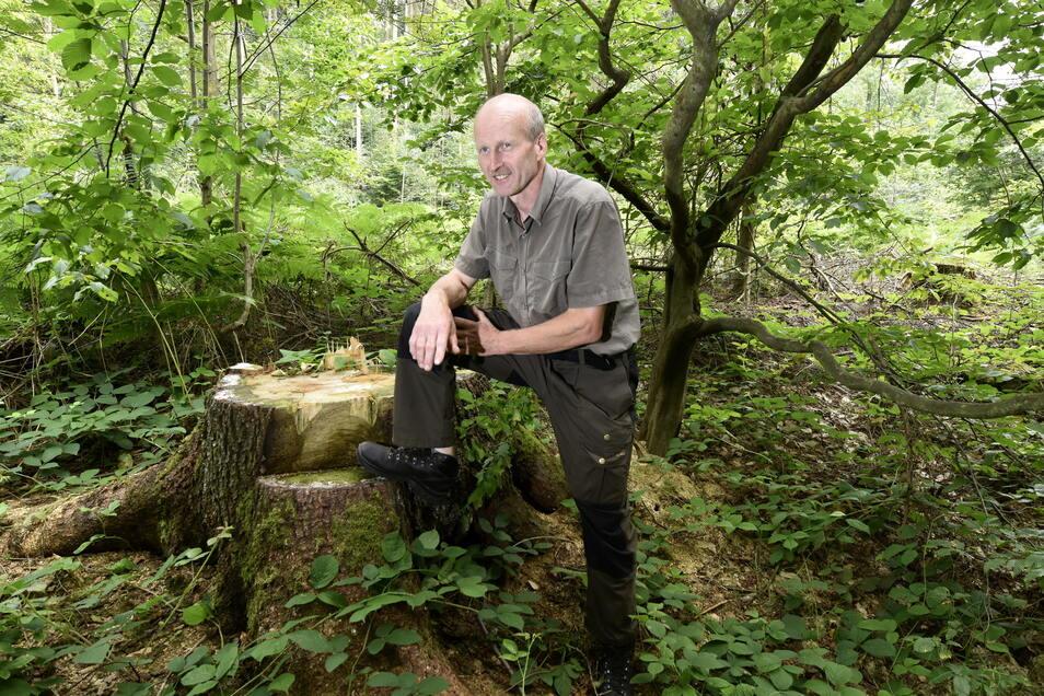 Heiko Müller von Sachsenforst erklärt, weshalb Reisig und Stubben gut sind für ein stabiles ökologisches Gleichgewicht im Wald.