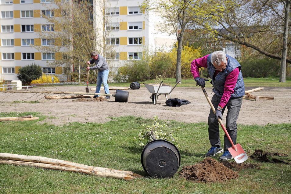 In den vergangenen Jahren wurden viele der Gebäude am Karl-Marx-Ring saniert, nun soll der Innenhof gestaltet werden. Dafür hat eine Initiative jetzt Bäume gespendet. Vorn Stadtrat Manfred Kuge, hinten Anwohner Helmut Stelzer, der mit anpackte.