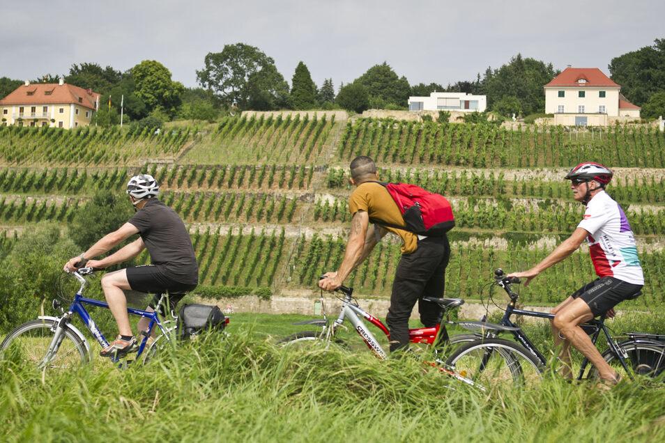 Den Elberadweg kennt jeder. Wir stellen sieben besonders schöne Radtouren durch die Region vor.
