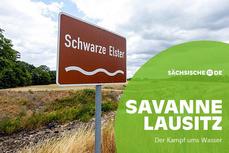 Erst im Juli, nun wieder im September: Die Schwarze Elster ist nahe der sächsisch-brandenburgischen Landesgrenze ausgetrocknet.