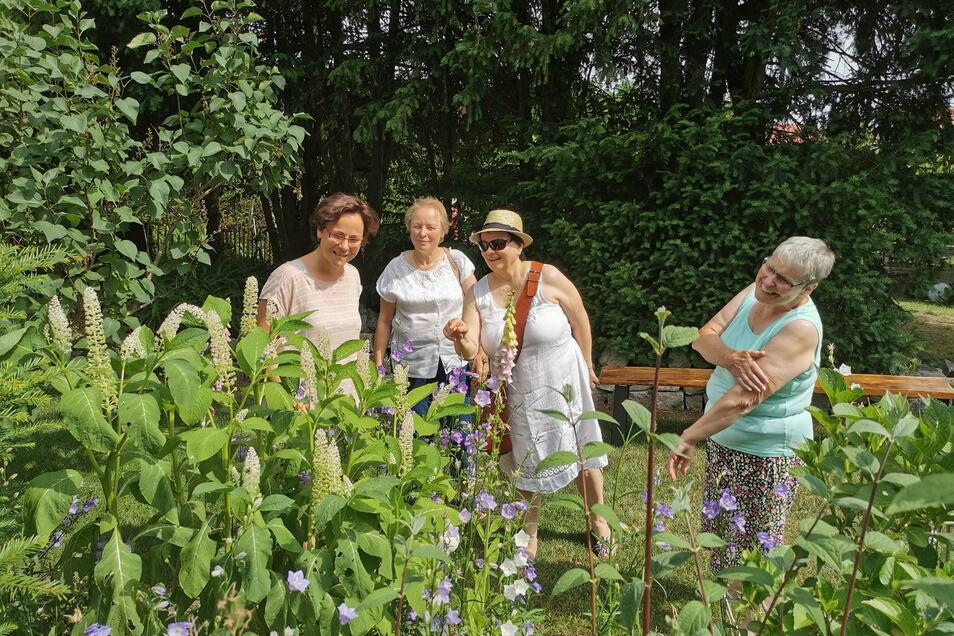 Die Offene Gartenpforte in Kamenz und Umgebung war ein voller Erfolg: Fast 300 Gäste konnte beispielsweise Familie Hilsberg in Biehla am Sonntag in ihrem Garten begrüßen.