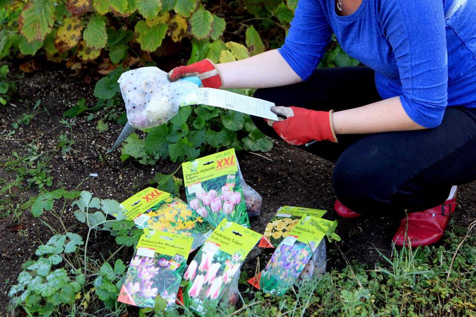 Wer einen farbenfrohen Garten im Frühling haben möchte, kann das Einheitsgrün von Bodendeckern mit den Blüten von Narzisse, Krokus und Co aufpeppen.