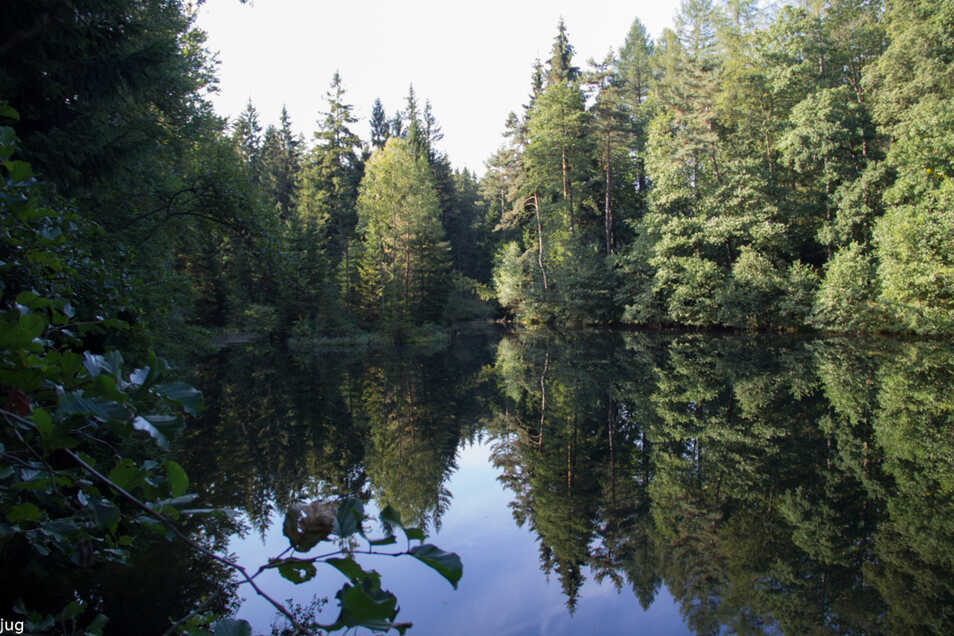 Ein bisschen weiter im Wald befindet sich der Fuchsteich.