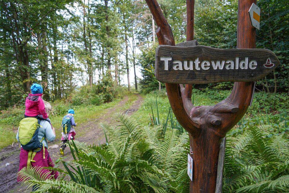 Bei einem Streifzug durch die Wälder können Kinder sagenumwobene Orte entdecken.