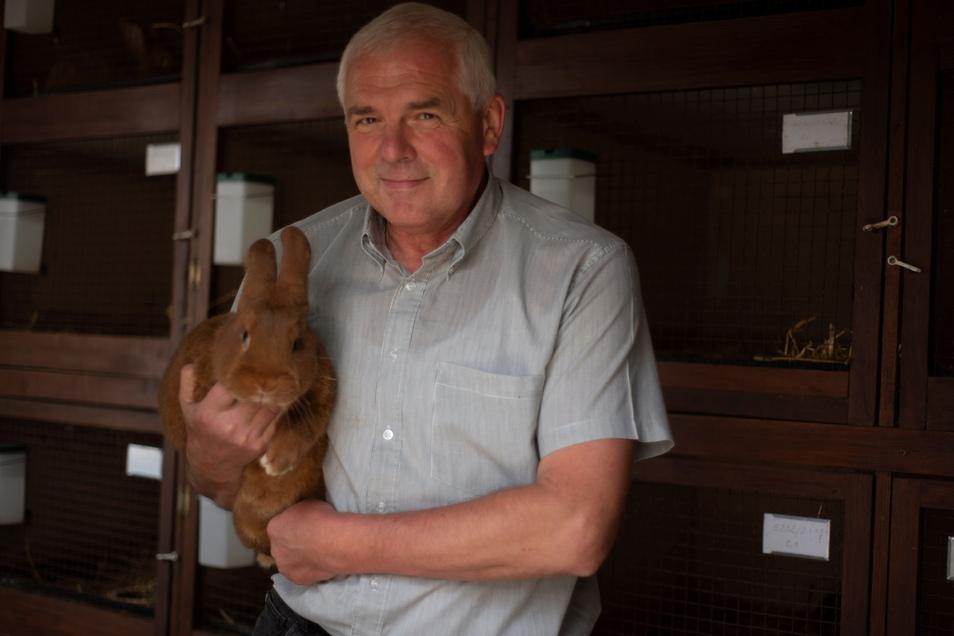Henry Schinke mit einem Roten Neuseeländer: Der Züchter aus Bischheim ist seit 23 Jahren Chef des Rassekaninchenzüchtervereins Kamenz & Umgebung.