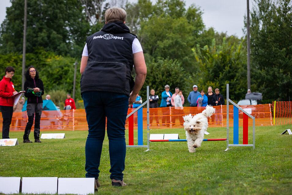 """Jana Krautschick und ihre Hündin Valli starteten für den gastgebenden Hundesportverein """"Pfote drauf"""" bei der SGSV-Meisterschaft in der Leistungsklasse 2."""