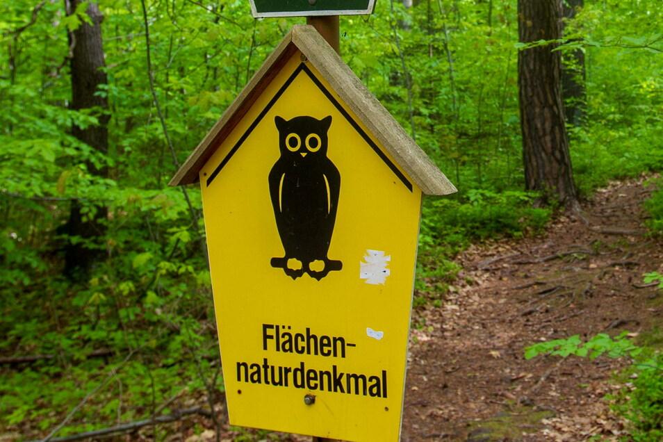 Die Waldohreule stand Pate für die Naturschutzschilder, wie hier im Tharandter Wald.