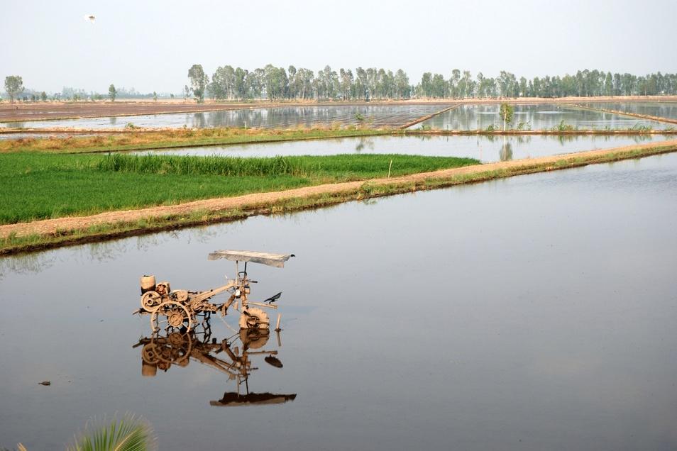 Die Felder im Mekong-Delta sind durch Sandabbau gefährdet.