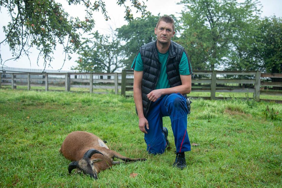 Schafsbesitzer Conrad Böhm ist entsetzt. In der Nacht zum Dienstag wurden in Rauschwitz bei Elstra sechs seiner Schafe gerissen.