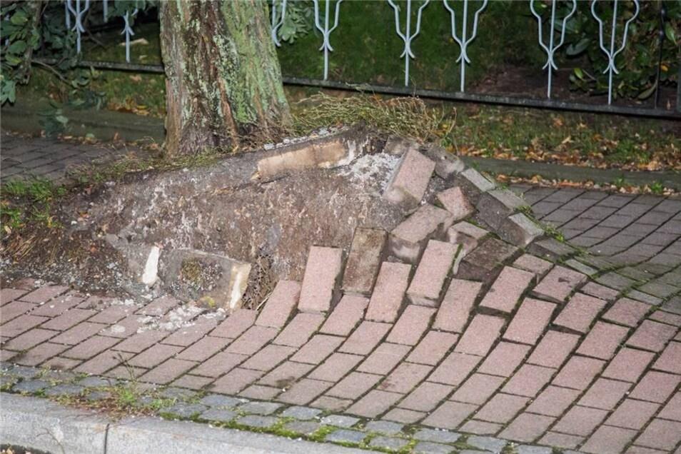 Der Baum wurde aus seinen Wurzeln gehoben.