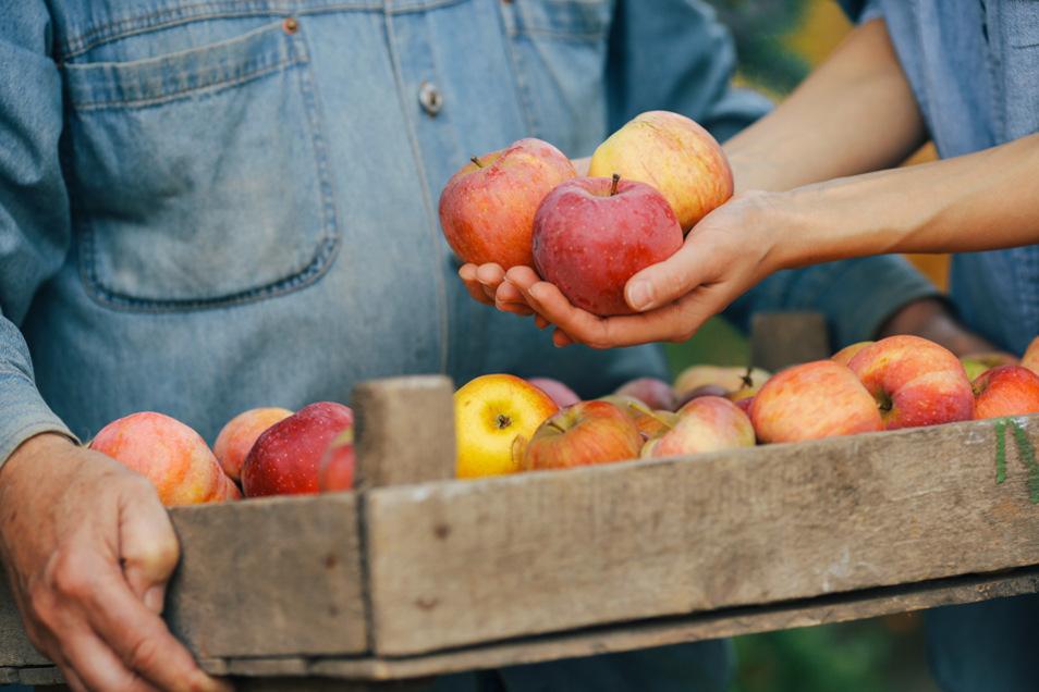Kurze Wege, bekannte Gesichter, transparente Herkunft: Wer Lebensmittel direkt beim Erzeuger einkauft, der weiß, wo sein Essen herkommt und wer es erzeugt hat.