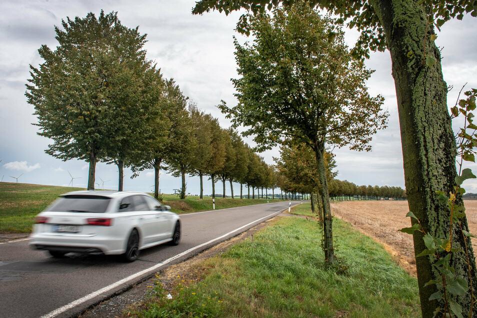 Mehr als 40 Linden sollen weichen, damit die Kreisstraße vor Bockelwitz neu ausgebaut werden kann.