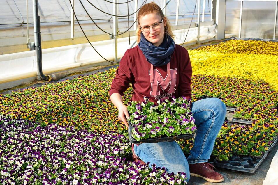 Jacqueline Schlehahn von der Gärtnerei Hennig in Lommatzsch präsentiert Frühjahrsblüher. Seit Montag dürfen auch wieder Gärtnereien und Gartenmärkte öffnen.