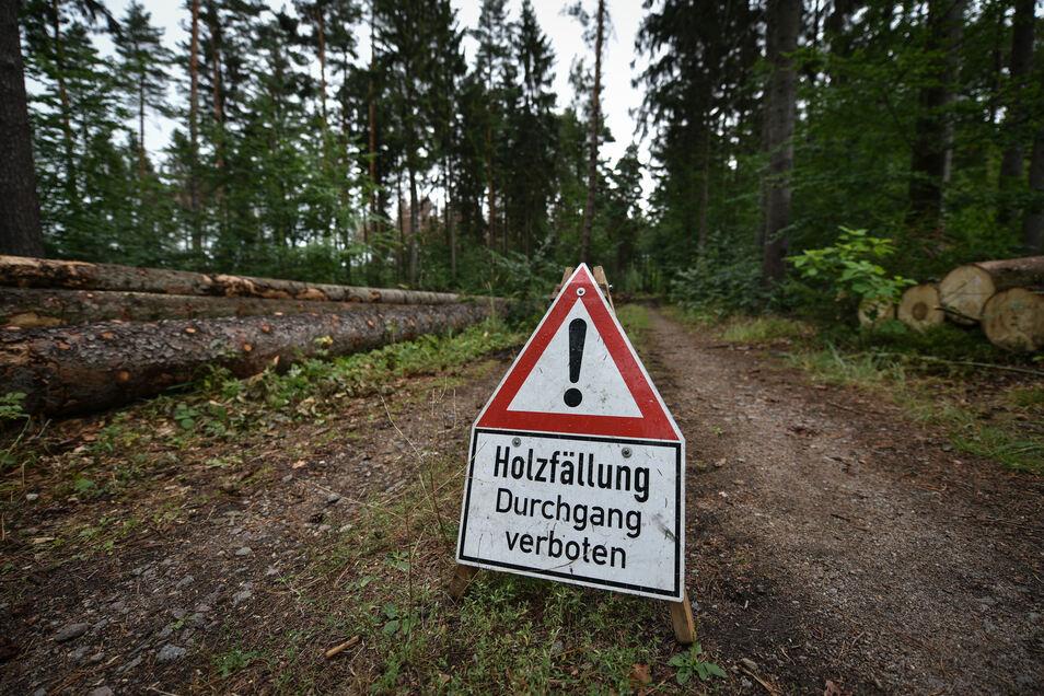 Werden oft ignoriert: Warnschilder weisen auf die Lebensgefahr bei Baumfällungen hin.