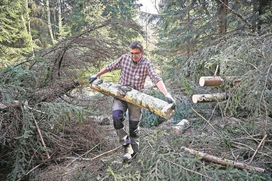 Dietmar Scholz aus Radeberg hat schwer zu schleppen. Viele Bäume hatte Sturm Eberhard auch am Forststeig umgeknickt. Die Förster brauchen jede helfende Hand.