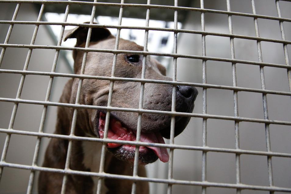 Nach dem Hundeangriff in Sebnitz fordert die Tierschutzorganisation PETA die Einführung einer Hundeführerschein-Pflicht in Sachsen.