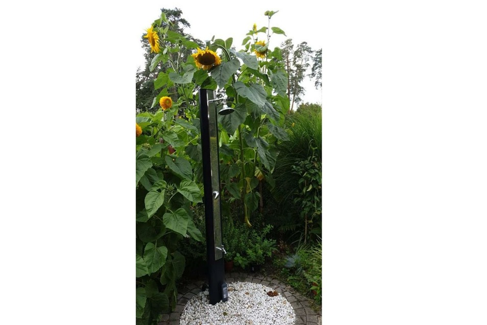 Duschen unter Sonnenblumen: Fast drei Meter hoch sind diese Exemplare im Garten in der Dresdner Heide. Die gehört dem Freund von Kathrin Prinz, die aus Ebersbach stammt. Der Garten sei in Augenschmaus für die Seele, schreibt sie.