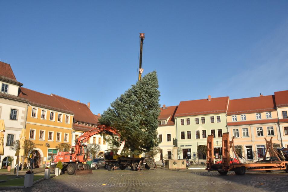 Schön gewachsen ist die Coloradotanne, die am Dienstagmorgen auf dem Hoyerswerdaer Markt als Weihnachtsbaum aufgestellt wurde.